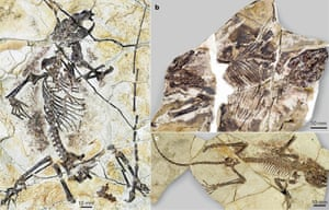 Three new species of Haramiyidan described by palaeontologists last year. Fossils from China are fuelling new discussions about ancient mammal-like animals, letting us examine their whole body where previously only teeth and bone fragments existed.