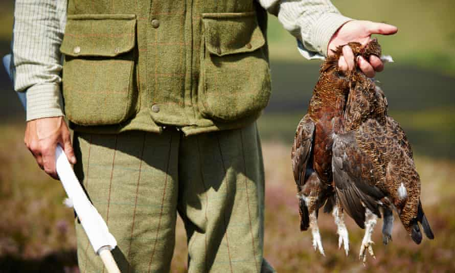 A grouse shooter holds two of the birds