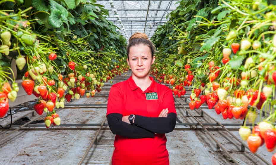 Zyulfie Yusein, a Bulgarian graduate and seasonal worker on a strawberry farm in West Sussex.