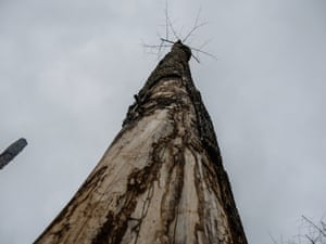 The remains of a burnt tree in Mont Tia forest reserve, Ivory Coast.