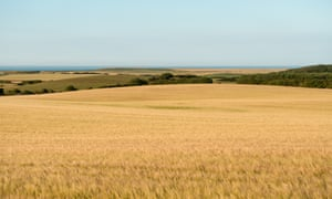 Parched fields in Yorkshire