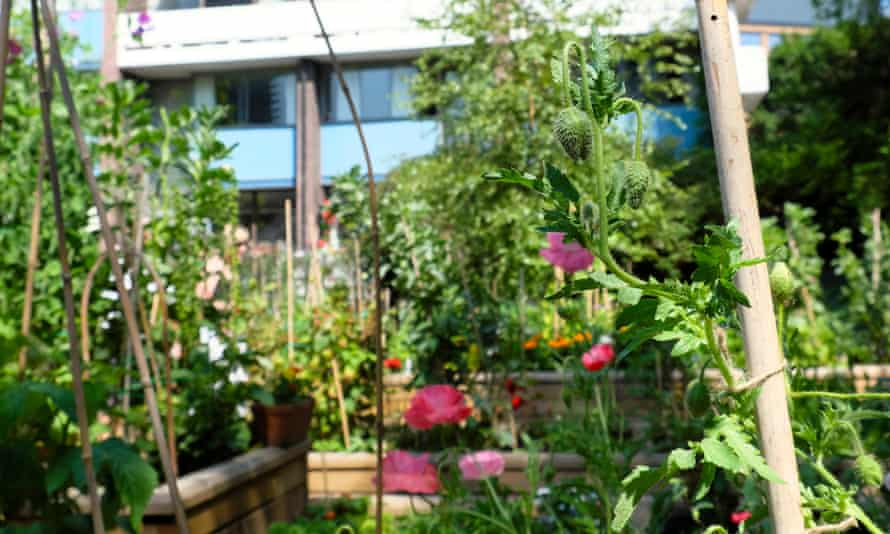 Greens are good for you: a community garden shared by flats.