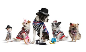 Doggy style ... Harajuku Lovers' range of pet clothing.