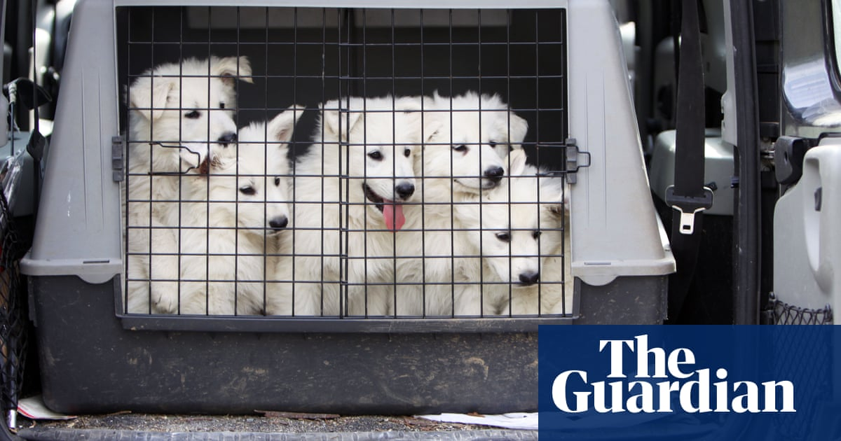 Eurotunnel clamps down on dog travel amid puppy smuggling fears