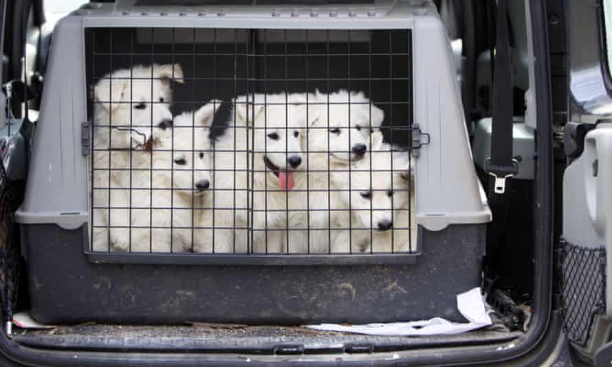 An estimated 250,000 dogs enter the UK each year via the Channel Tunnel.