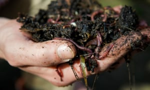 Close up of a mans hand holding earth worms in freshly dug soil from compost heap. Image shot 03/2009. Exact date unknown.<br>B9THW5 Close up of a mans hand holding earth worms in freshly dug soil from compost heap. Image shot 03/2009. Exact date unknown.
