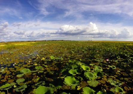 Waterlilies and flooded wetlands in Kakadu national park during wet season