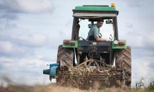 Farmer on tractor harvesting organic potatoes.