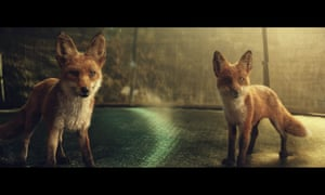 Foxes in John Lewis ad