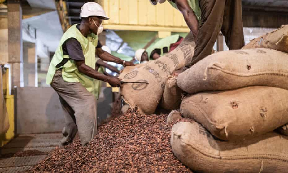 Ivorian man with knife opening sack of cocoa beans