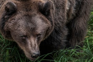 A brown bear is seen in the Spormaggiore animal park in Trentino, Italy