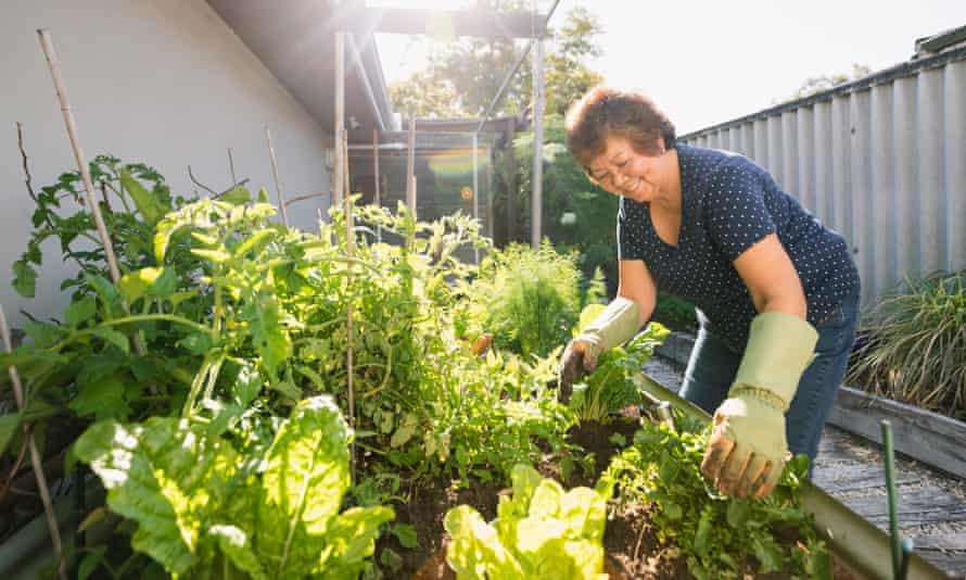 Senior Asian woman gardening at her home in Perth, Australia.