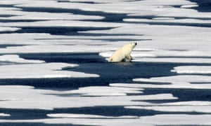 A polar bear climbs out of the water to walk on the ice in the Franklin Strait in the Canadian Arctic Archipelago.