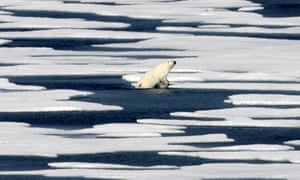 A polar bear climbs out of the water to walk on the ice in the Franklin Strait in the Canadian Arctic Archipelago, 22 July 2017