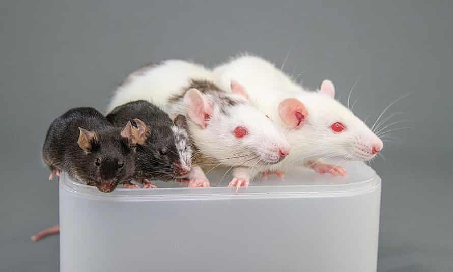 یک موش ، یک کیمرا موش موش ، یک کیمرا موش موش و یک موش موش صحرایی.