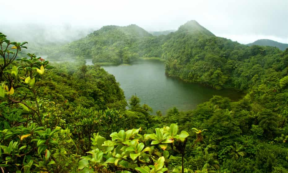 Rainforest around a freshwater lake in Dominica