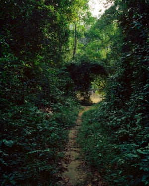 ... to the forests of Gabon.
