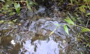 Dairy farm pollution along the River Culm, that flows through the Blackdown Hills in Devon, September 2015