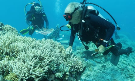 Divers examining coral for the Biobank project.