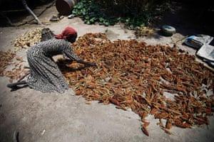 A woman dries sorghum in her house in Panddap, in northern Bahr El Ghazal, South Sudan