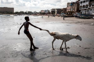 A young farmer drags one of his sheep toward the sea in order to clean it in ahead of the Muslim Eid al-Adha.