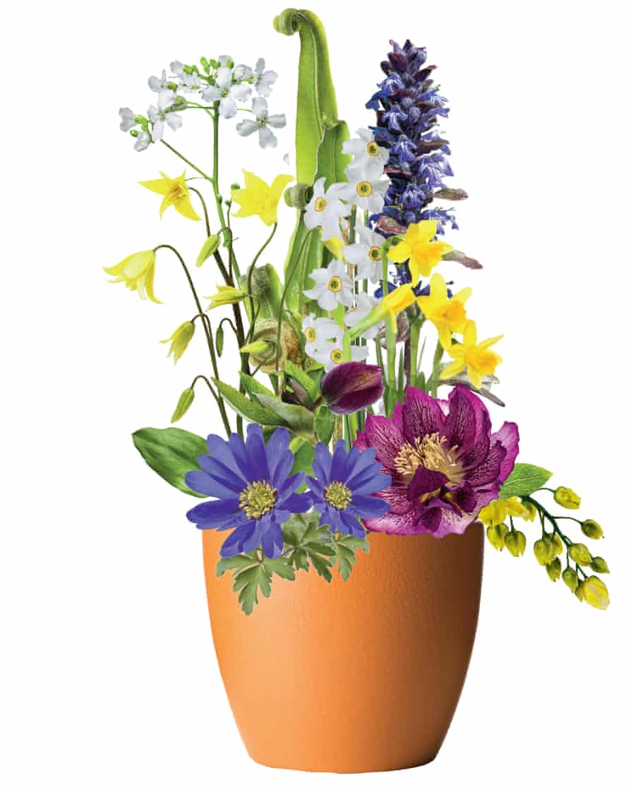 Pots of gold: a step-by-step guide for gorgeous spring flowers