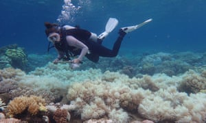 Australia's Great Barrier Reef is already suffering coral 'bleaching' from rising temperatures.