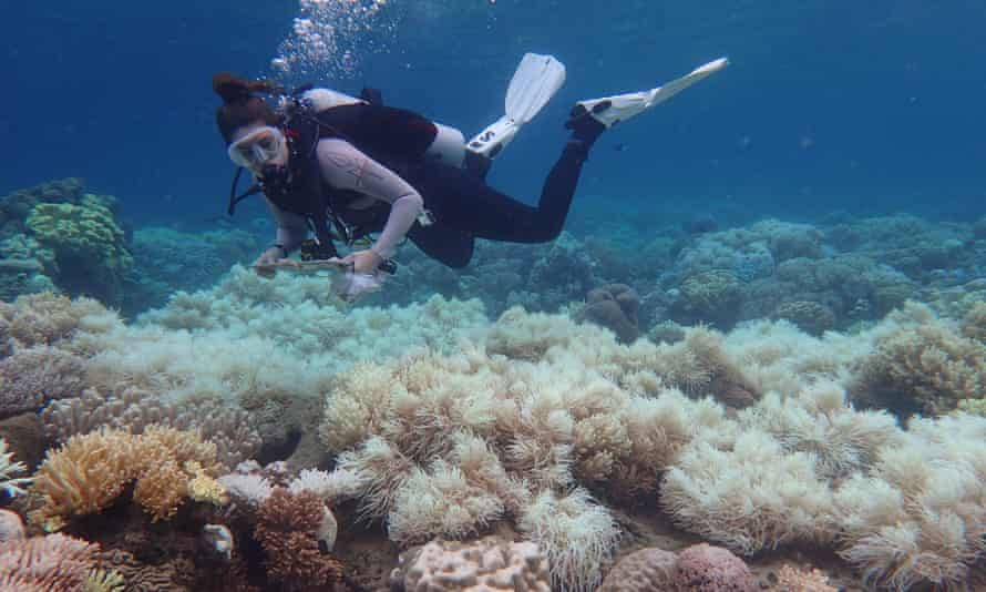 A diver swims above bleaching damage on the corals of the Great Barrier Reef in Australia.