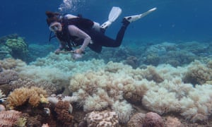 Coral bleaching on the Great Barrief Reef