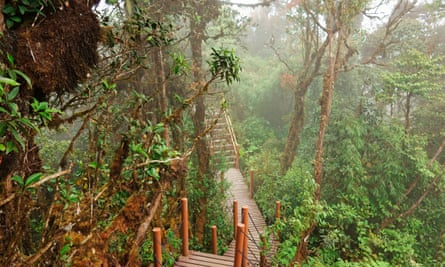 Where moss is boss … the Cameron Highlands boardwalk, Pahang, Malaysia.