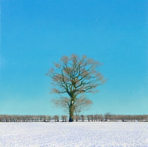 Oak After Snow Oil on canvas, 300mm x 300mm