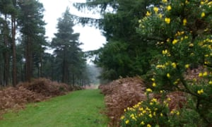 Milkham Inclosure, New Forest: Many local trees were lost to the axe during the battles of Ypres 100 years ago, but saved 'mother trees' provided the next seedlings