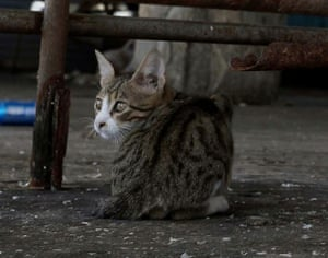 A cat at a fish market in Gaza. There is no suggestion this cat has coronavirus.