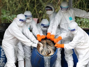 Thai wildlife officials drain formaldehyde out of a barrel containing the carcass of a tiger seized from the controversial Tiger Temple, at Khao Prathap Chang Wildlife Sanctuary in Ratchaburi province, Thailand. The temple's abbot has been charged with wildlife trafficking, animal abuse and illegal breeding
