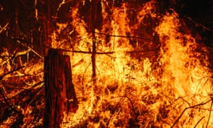 Firefighters battle bushfires in Tarome and Lower Beechmont, Queensland on Tuesday