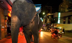 An elephant in Bangkok