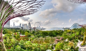 In Singapore, the National Parks Board plants more than 50,000 trees a year along roadsides, and in parks and gardens.