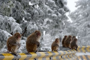 Macaques sit beside a road in Ayubia, north of Islamabad in Pakistan