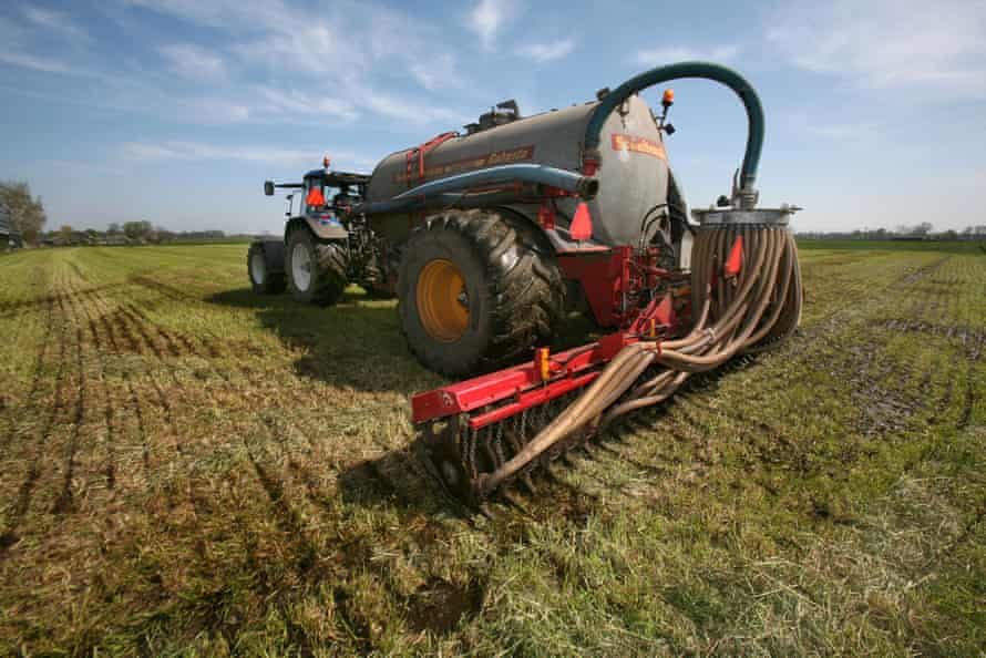 Farmers spread manure on the fields.