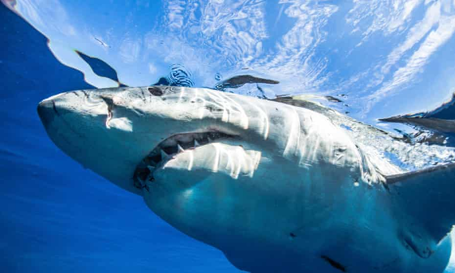 Lawmakers in Honolulu have advanced a proposed ban on killing any shark in Hawaii waters.