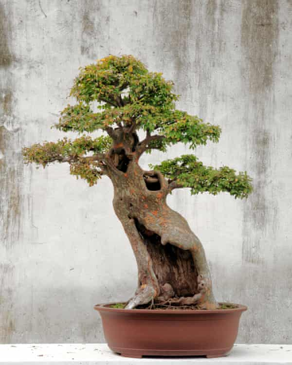 Perfectly formed… a bonsai tree.