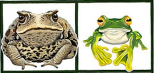 Cane toad (left) and flying frog