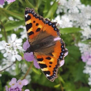 Stuart and his five-year-old daughter Freya spotted this tortoiseshell butterfly in Edinburgh.