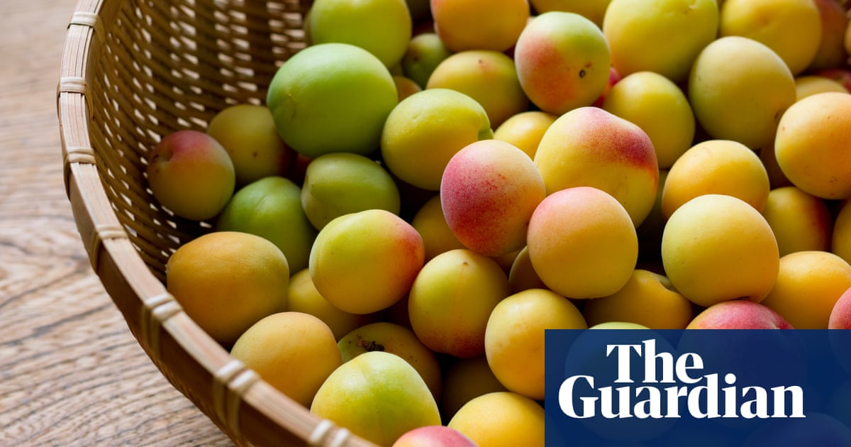 'Quince challenged me': how to cook, eat and enjoy seven of the world's most difficult fruits