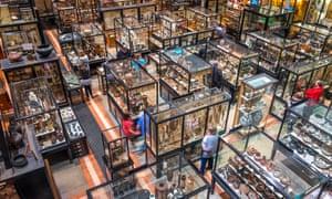 Pitt Rivers Museum, Oxford, Oxfordshire, England, United Kingdom