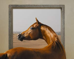 This highly constructed image is of an Arabian halter, a supermodel of the horse world. It has been composed to allude to George Stubbs's famous painting Whistlejacket, utilising similar tones. Taken at the pristine Ajman stud in the United Arab Emirates, it was lit by a flash indoors, looking out of the window to the bright sunshine