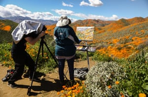 A man photographs a woman painting a super bloom in Walker Canyon