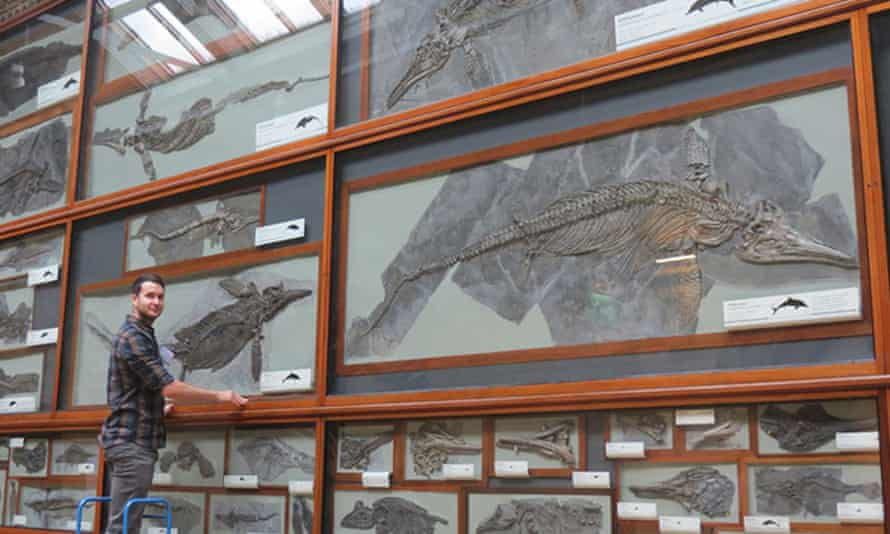 Dean Lomax examining historical collections of ichthyosaurs in the Natural History Museum in London.