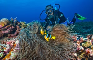 West Side Story dive site, Hideaway Island, Efate