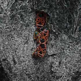 Witch 'n' Monk: Witch 'n' Monk album art work